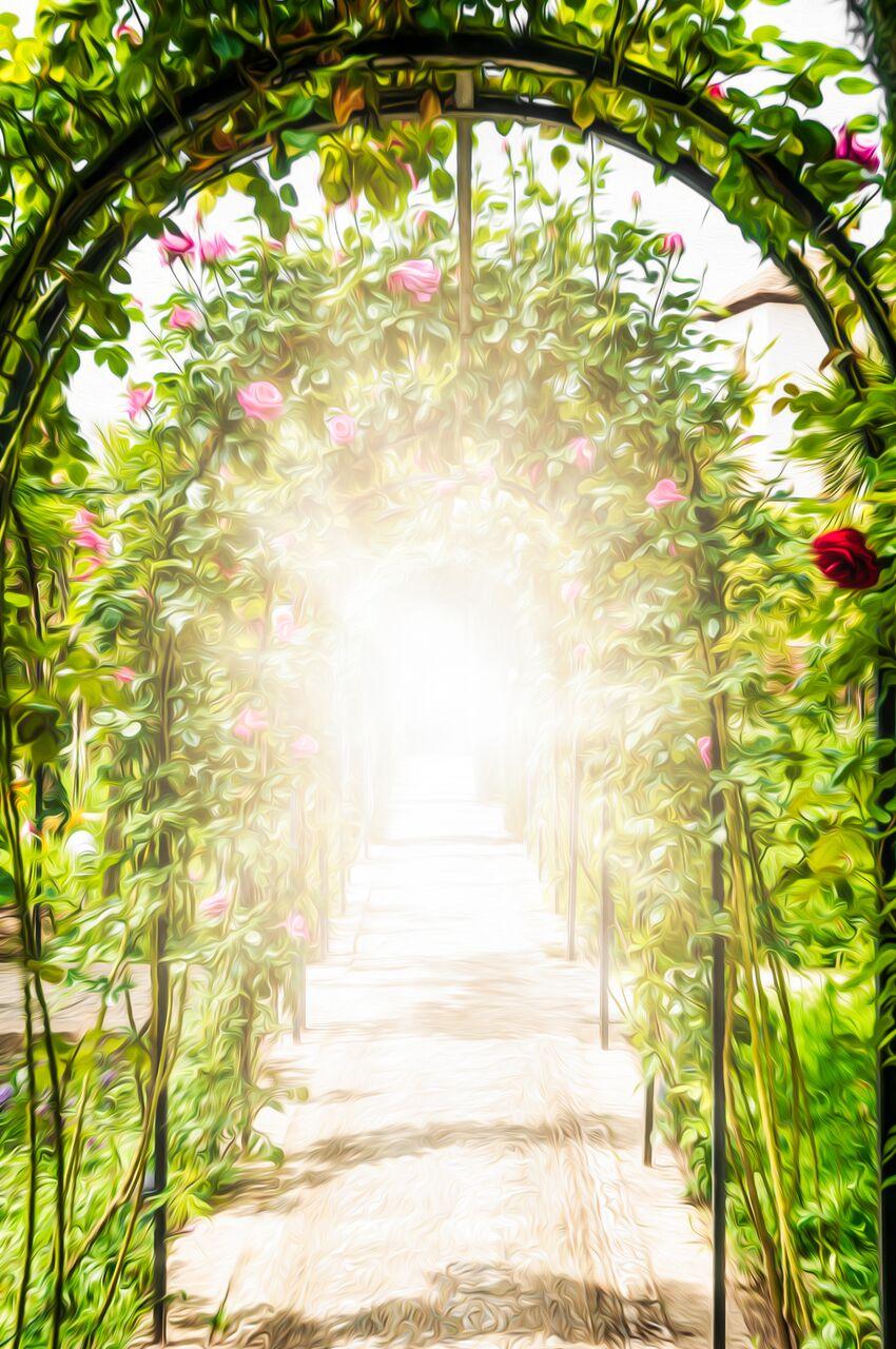 A varázslatos kert