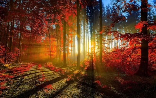 12 ok, amiért tisztelnünk kell az erdőket