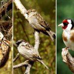 Te döntheted el, melyik legyen az év madara!