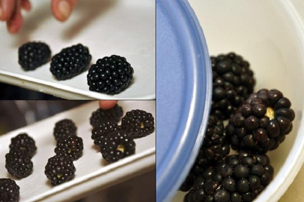 Fagyasztási kisokos gyümölcsfélékhez