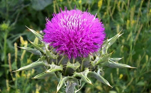 10 rendkívül hatásos gyógynövény. Hányat ismersz közülük?
