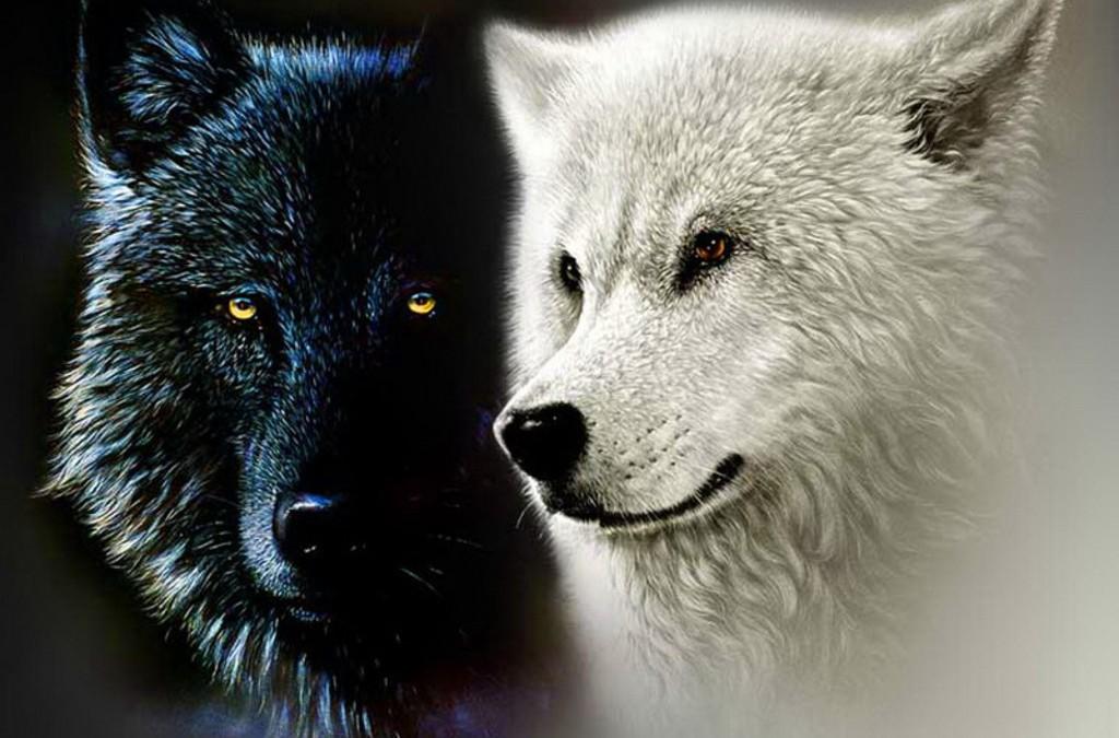 Te melyiket eteted a két farkasod közül?