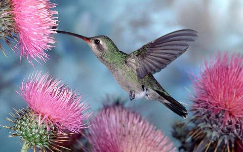 A kolibri és a gólya versengése – szerinted ki volt a győztes?