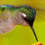 Mi a közös a kolibriben, az elefántban és a papucsállatkában?