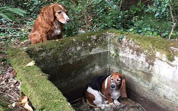 Ez a két kutyus megmutatja, mi az igazi hűség és szeretet