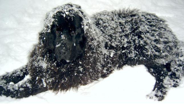 Kutyahideg van – fáznak-e a kutyák? Ha igen, mik a jelei?