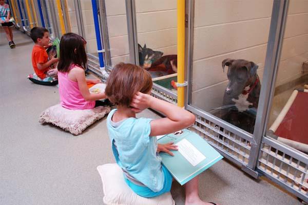Kutyusoknak olvasnak fel kisdiákok egy menhelyen! A programnak elképesztő sikere van!
