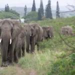 Az elefántok tényleg nem felejtenek – 31 elefánt megható gesztusa jótevőjükért