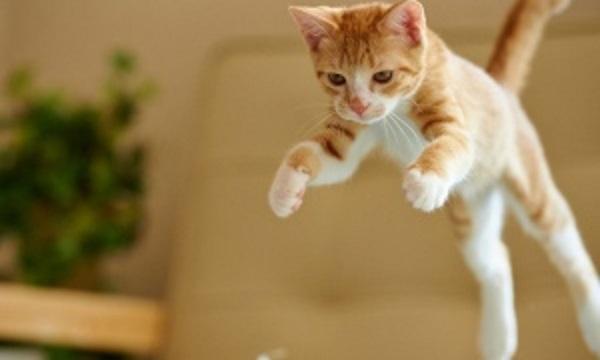 Ezért esnek a macskák mindig talpra!