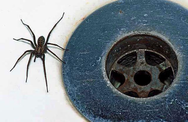 """Természetes """"pókriasztók"""" otthonra"""