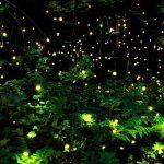 Csodálatos fényjáték a nyári éjben – a szentjánosbogarak tánca