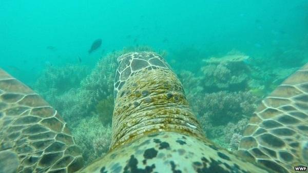 Így néz ki a Nagy-korallzátony egy teknős szemével