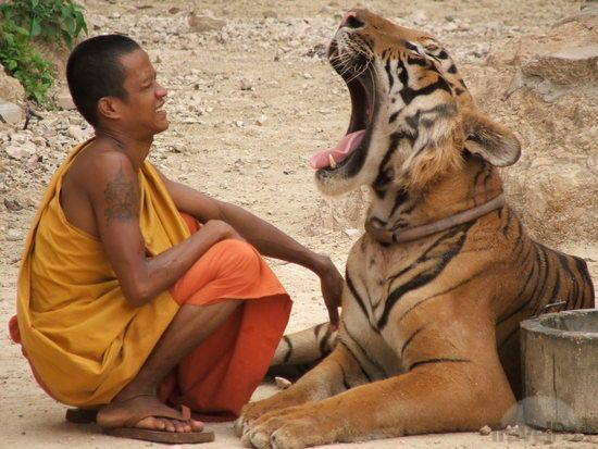 A tigris, az eper és a buddhista szerzetes – egy történet mindenkinek aki fél