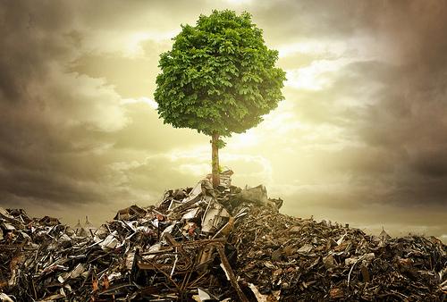 Globális erdőhelyzet