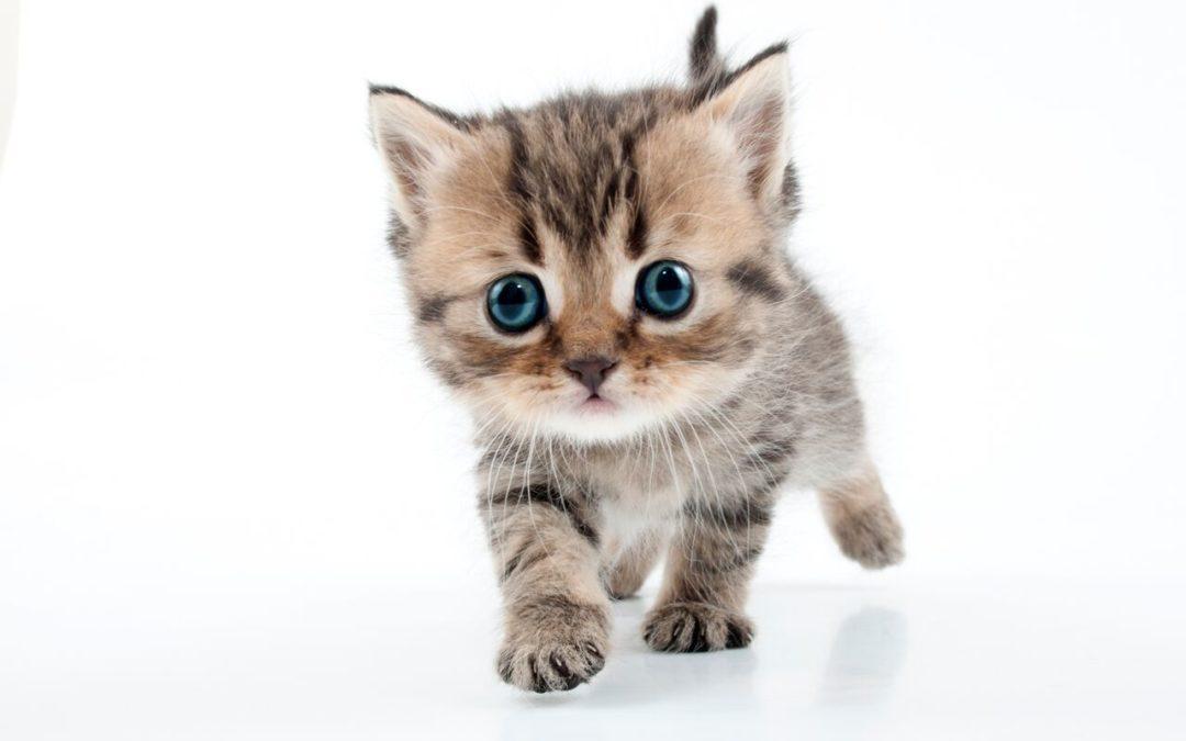 Macskajaj