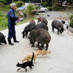 Megható, mit tesz a Fukusimában árván maradt állatokkal ez a férfi!