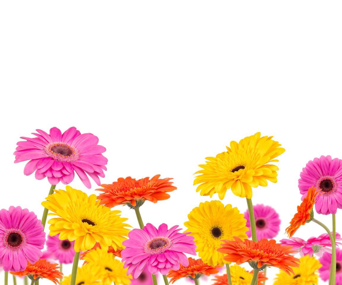 Virágesszenciákkal az egészségért