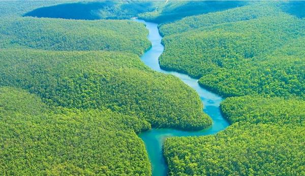 Egy svéd milliomos elképesztő dolgot tett csak azért, hogy megmaradjon az amazonasi esőerdő