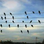 """Mintha egy kottán ülnének! Így hangzik a madarak """"éneke"""":"""