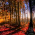 Mire figyeljünk októberben? – Népi bölcsességek