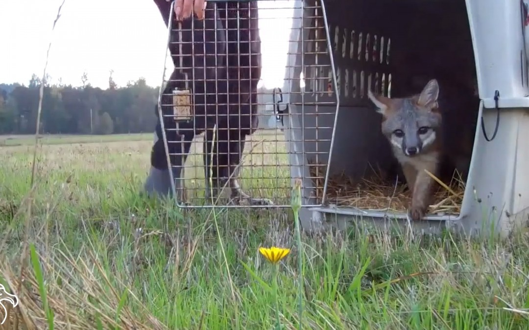 Állatok, akik először tudják meg, mi a szabadság – megható videó
